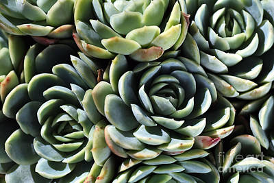 Photograph - Succulent World by Joy Watson