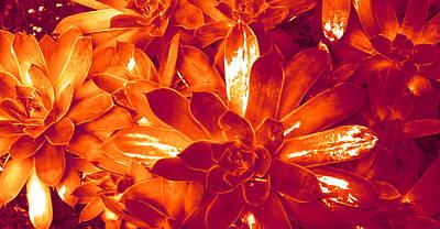 Succulents #1 Art Print
