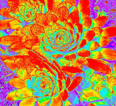 Photograph - Succulents #17 by Anne Westlund