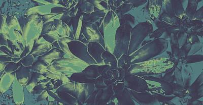 Photograph - Succulents #2 by Anne Westlund