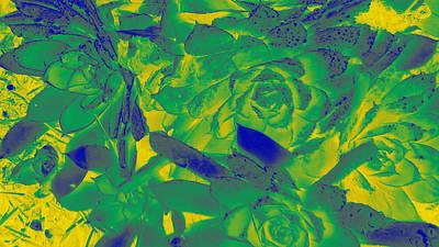 Photograph - Succulents #7 by Anne Westlund