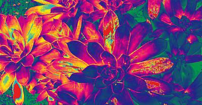 Photograph - Succulents #8 by Anne Westlund