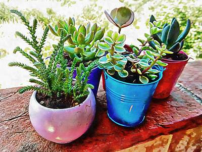 Photograph - Succulents Are Best Grouped Together by Dorothy Berry-Lound
