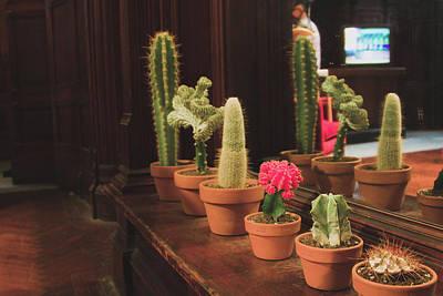 Succulents At The Museum Art Print