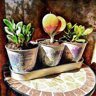 Photograph - Succulents In A Group Of Three by Dorothy Berry-Lound