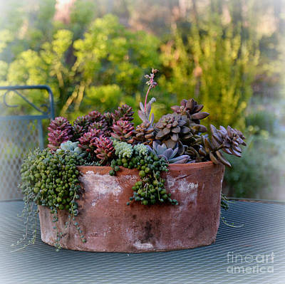Photograph - Succulents In Terracotta Planter by Tanya Searcy