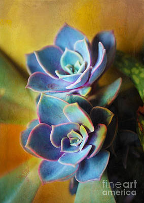 Photograph - Succulents by Judi Bagwell