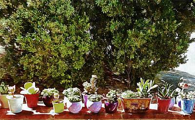 Photograph - Succulents On A Sunny Garden Wall by Dorothy Berry-Lound