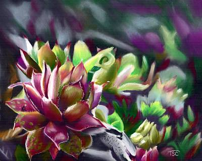 Hens And Chicks Painting - Succulents by Tammy Crawford