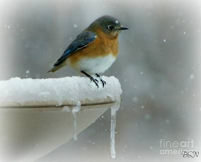 Photograph - Suddenly Winter by Barbara S Nickerson