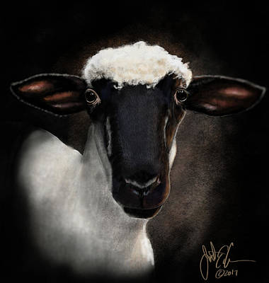 Digital Art - Suffolk Sheep by Jonathan Carr
