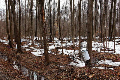 Photograph - Sugar Bush by Debbie Oppermann
