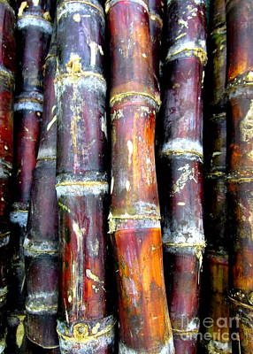 Photograph - Sugar Cane by Randall Weidner