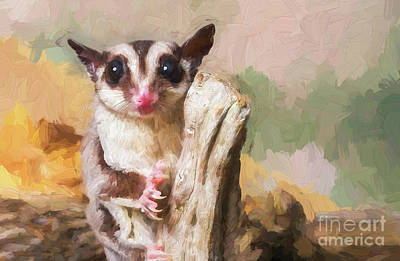 Photograph - Sugar Glider - Painterly by Les Palenik