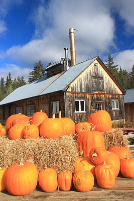 Photograph - Sugar House And Pumpkins by John Burk