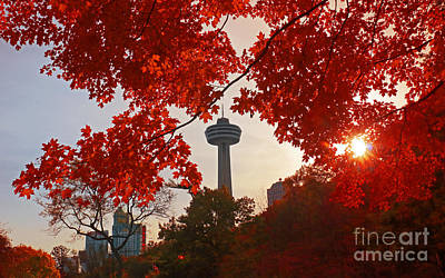 Photograph - Sugar Maple In Niagara Falls by Charline Xia