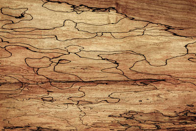 Photograph - Sugar Maple Spalted Wood Grain Pattern  by Phil Cardamone