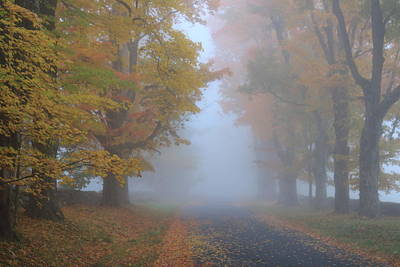 Photograph - Sugar Maples On A Misty Country Road by John Burk
