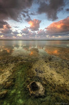 Water Droplets Sharon Johnstone - Sugarloaf Key by Ronald Kotinsky