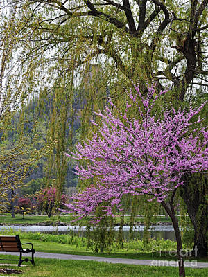 Photograph - Sugarloaf With Blossoms And Bench by Kari Yearous