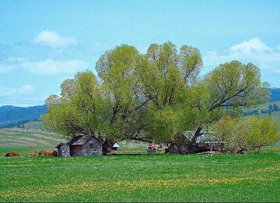 Sula Montana Homestead Revisited Art Print
