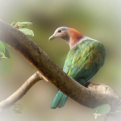 Digital Art - Sulawesi Green Imperial Pigeon by Daniel Hebard