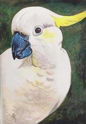 Painting - Sulphur Crested Cockatoo by Anne Gardner