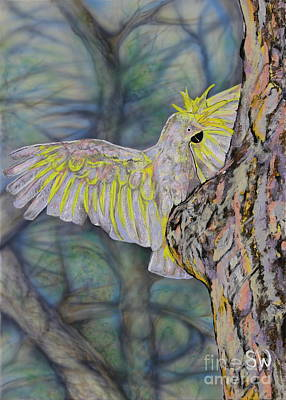 Sulphur-crested Cockatoo Is Anyone Home Original