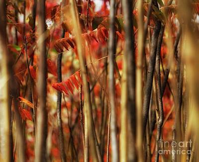 Sumac Tree Photograph - Sumac Abstract by Jimmy Ostgard