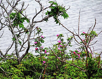 Photograph - Sumac And Wild Roses by Debbie Oppermann
