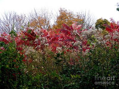 Photograph - Sumac And Wildflowers by Nancy Kane Chapman