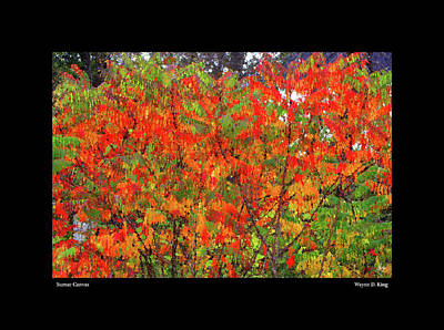 Photograph - Sumac Canvas Poster by Wayne King