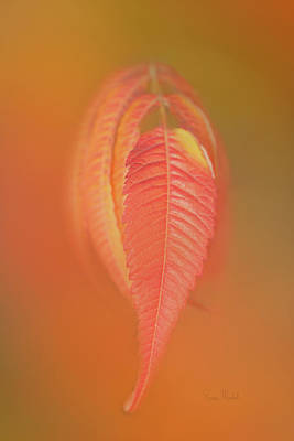 Digital Art - Sumac Leaf by Ramona Murdock