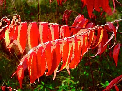 Photograph - Sumac Leaves by Stephanie Moore