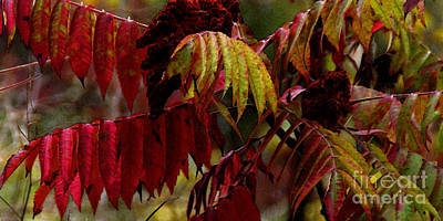 Photograph - Sumac by Linda Shafer