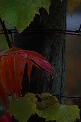 Grape Leaves Photograph - Sumac by The Stone Age