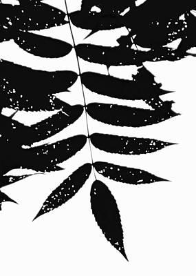 Sumac Art Print by Tim Good