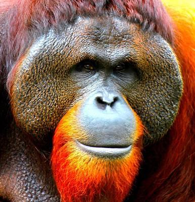 Orangutan Mixed Media - Sumatran Orangutan Male by The Griffin Passant Streetworks