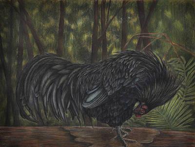Sumatran Rooster Art Print by Amber Chiozza