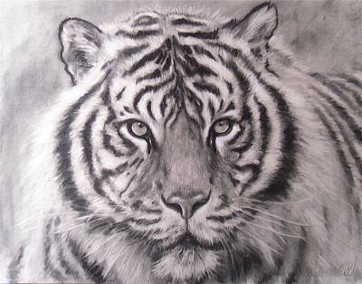 Sumatran Tiger Art Print by Adrienne Martino