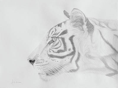 Drawing - Sumatran Tiger by Andrea Angulo