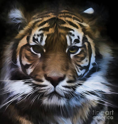 Of Tigers Photograph - Sumatran Tiger by Avalon Fine Art Photography