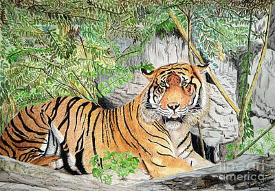 Sumatran Tiger Art Print by Yvonne Johnstone