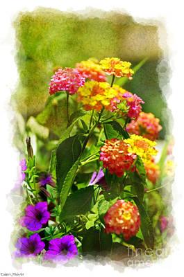 Photograph - Sumer Lantana Garden by Debbie Portwood