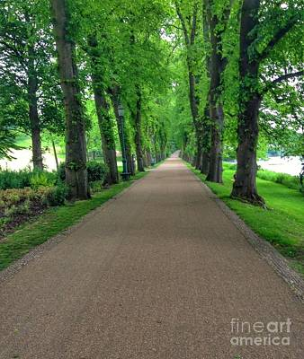 Photograph - Summer At The Avenue Of Limes 2 by Joan-Violet Stretch