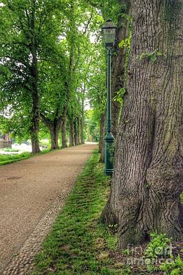 Photograph - Summer At The Avenue Of Limes 3 by Joan-Violet Stretch