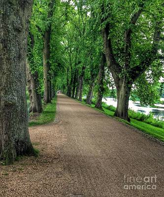 Photograph - Summer At The Avenue Of Limes 4 by Joan-Violet Stretch