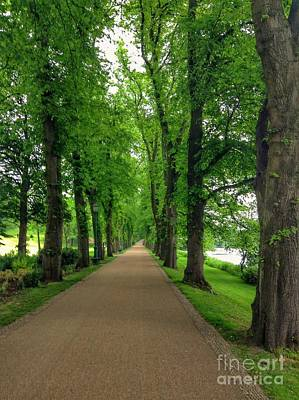 Photograph - Summer At The Avenue Of Limes by Joan-Violet Stretch