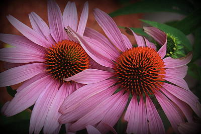 Photograph - Summer Beauties - Coneflowers by Dora Sofia Caputo Photographic Design and Fine Art