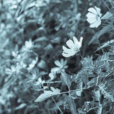 Photograph - Summer Beauties Cyanotype II by Marianne Campolongo